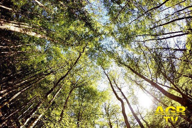 Lipu e Birdlife, PNRR, Strategia europea sulla biodiversità per il 2030