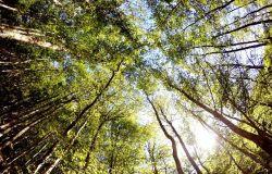 PNRR, trasmesso alla commissione europea il dossier con le mancanze italiane sulla biodiversità