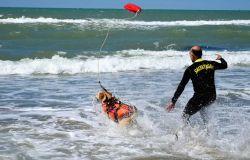 cani di salvataggio in azione