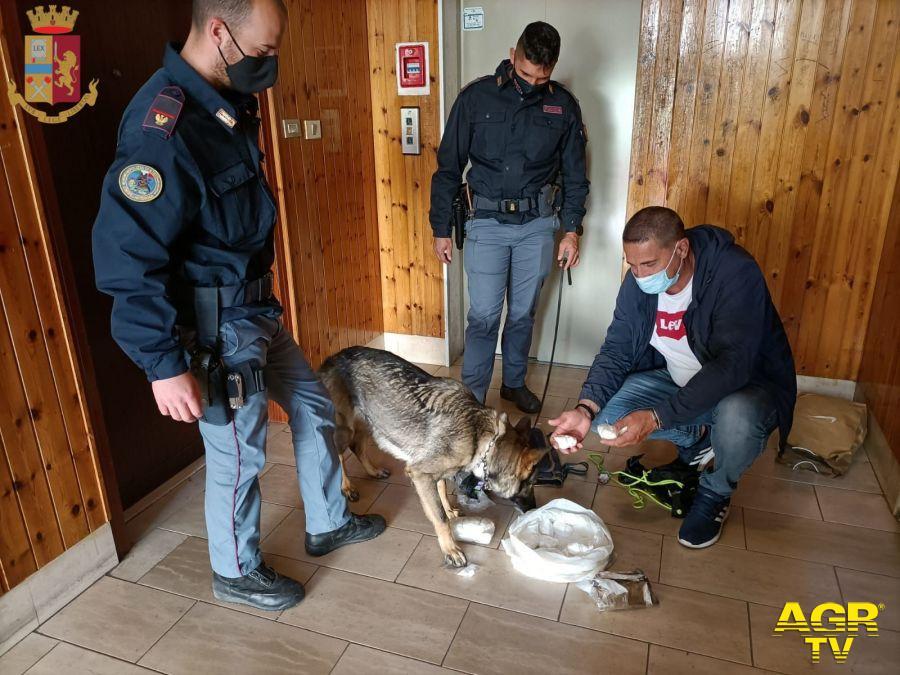 cane poliziotto fiuta 800 gr. cocaina