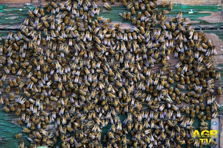 le api nell'alveare
