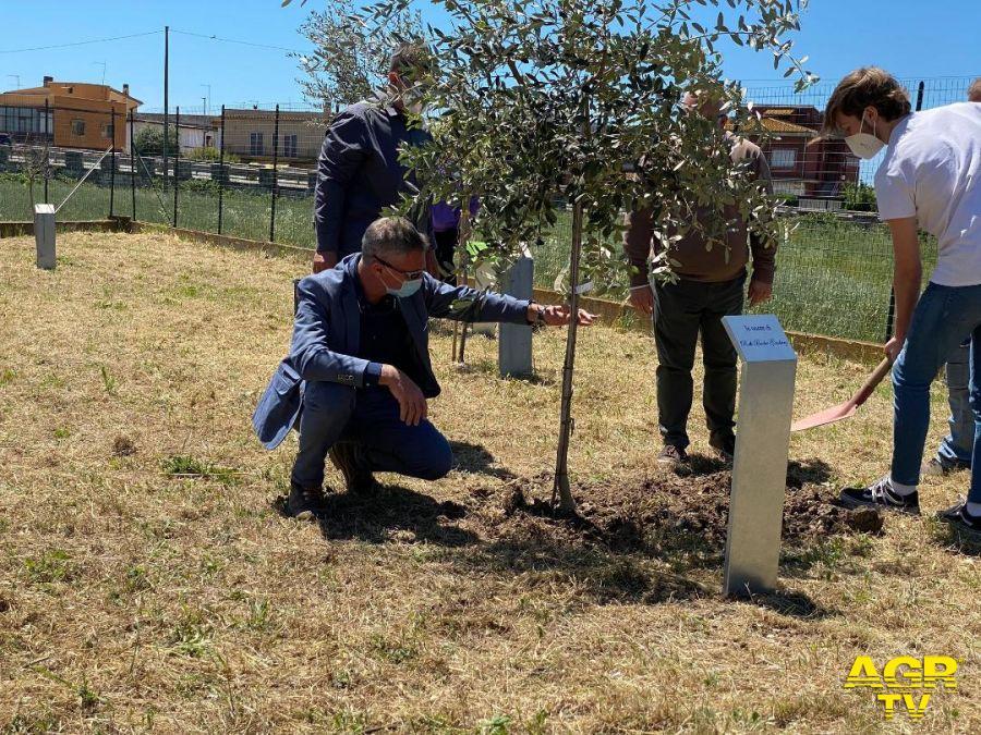Maccarese, nel Giardino dei Giusti piantati due alberi di ulivo