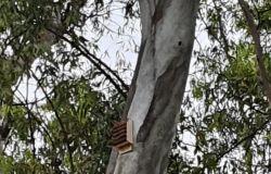 Bat Boxes installata su albero Villa Guglielmi