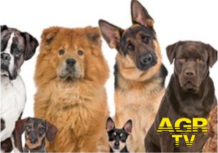 Ugnano il corso di primo soccorso veterinario