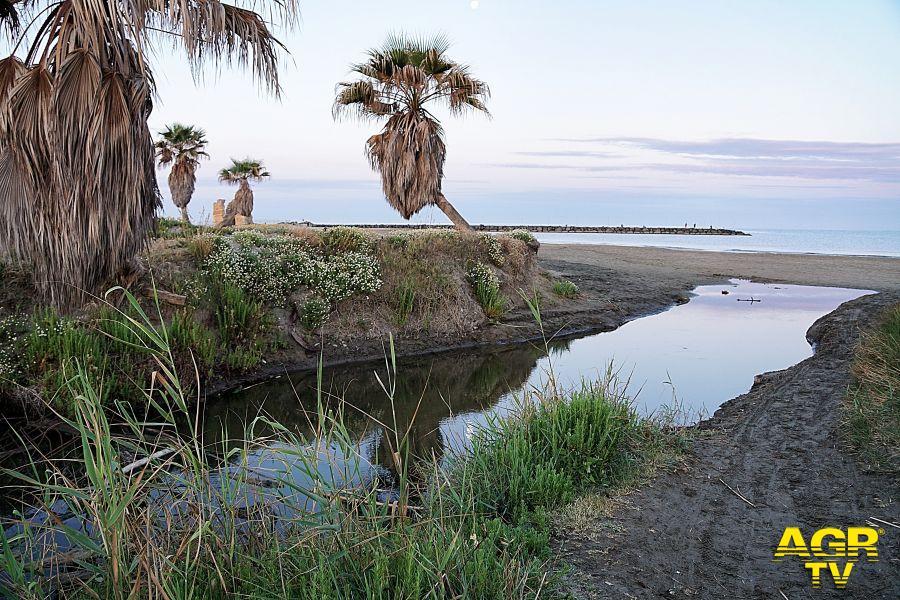 dune sabbiose