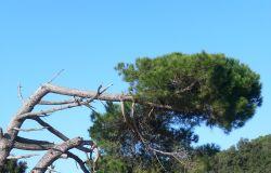 Macchiagrande foto Mariotti (WWF)