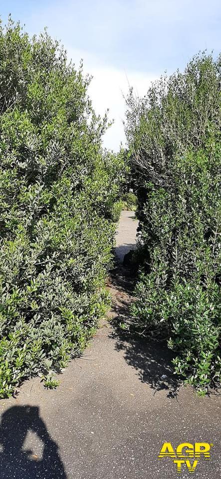 Cosa sarebbe successo se la pista ciclabile di Ostia fosse sorta nell'area verde davanti al Lungomare Lutazio Catulo?