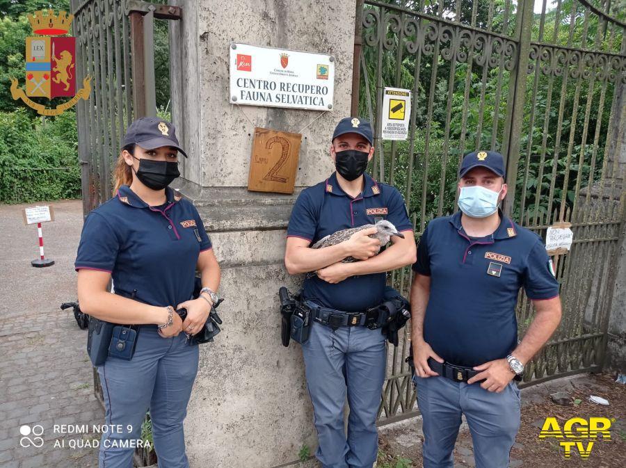 polizia salva gabbianella ferita