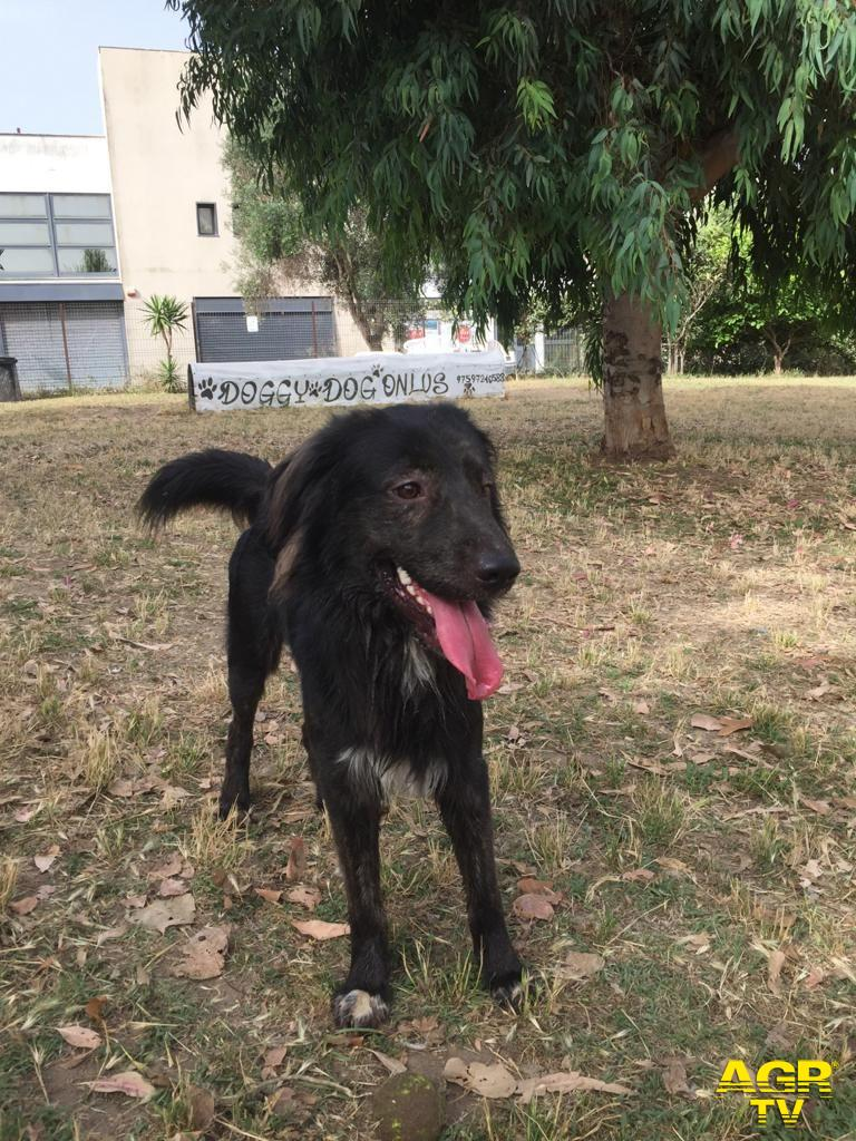 cane disperso a Parco Pallotta