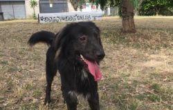 Un cane si perde al Parco Pallotta: Guardia Zoofila interviene e lo riconsegna ai proprietari