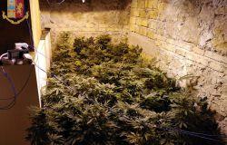 serra di marijuana in via della Nocetta