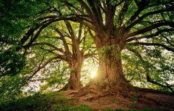 Anno Internazionale della salute delle piante, determinanti i legami tra biodiversità, salute degli ecosistemi e specie umana