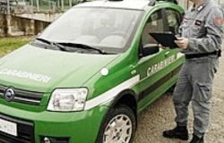 I Carabinieri forestali reclutano gli studenti per la tutela dell'ambiente