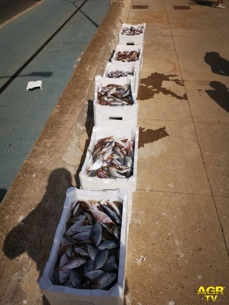 Pesce venduto abusivamente sulla banchina di Fiumicino