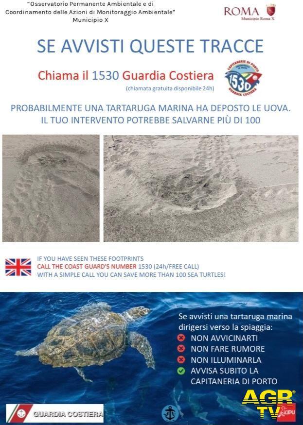 Ostia, dopo i delfini capitolini ecco le tartarughe marine, le specie protette scelgono il mare di Roma