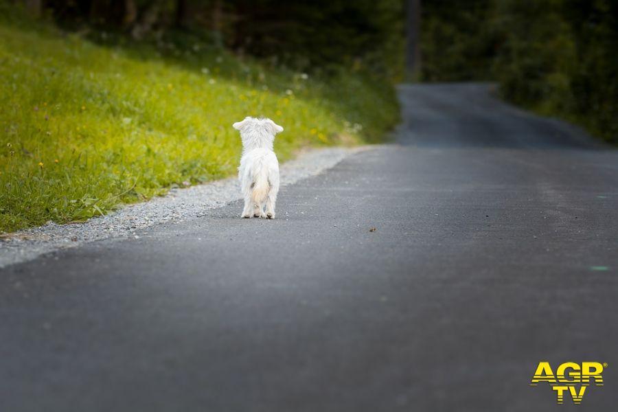 cane abbandonato lungo la strada