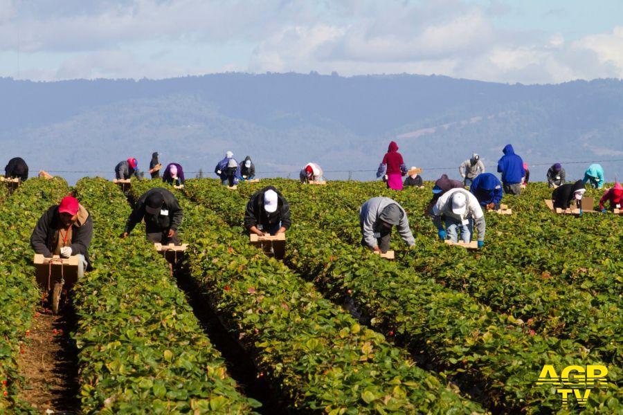 lavoratori immigrati