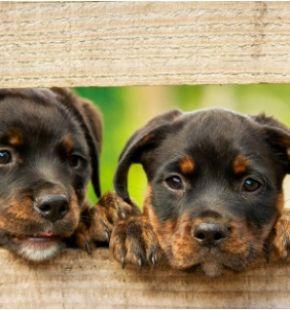 Furti di cani: triste record in Italia, come proteggere il tuo amico a 4 zampe
