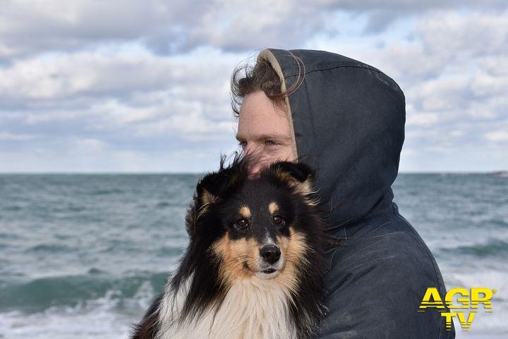 un cane in braccio al suo padrone