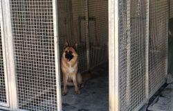 Accolti al Rifugio 10 dei 71 cani provenienti dalla struttura abusiva sequestrata a Molazzana
