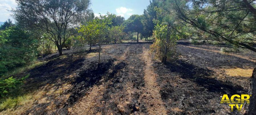 Carabinieri-Comando provinciale di Firenze Accende fuoco nel bosco, denunciata una pensionata per incendio colposo