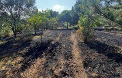 Accende fuoco nel bosco, denunciata una pensionata per incendio colposo
