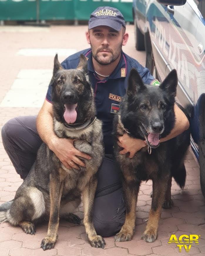 """Questura di Firenze """"Amper"""", cane poliziotto antidroga, va in pensione e trova subito casa"""