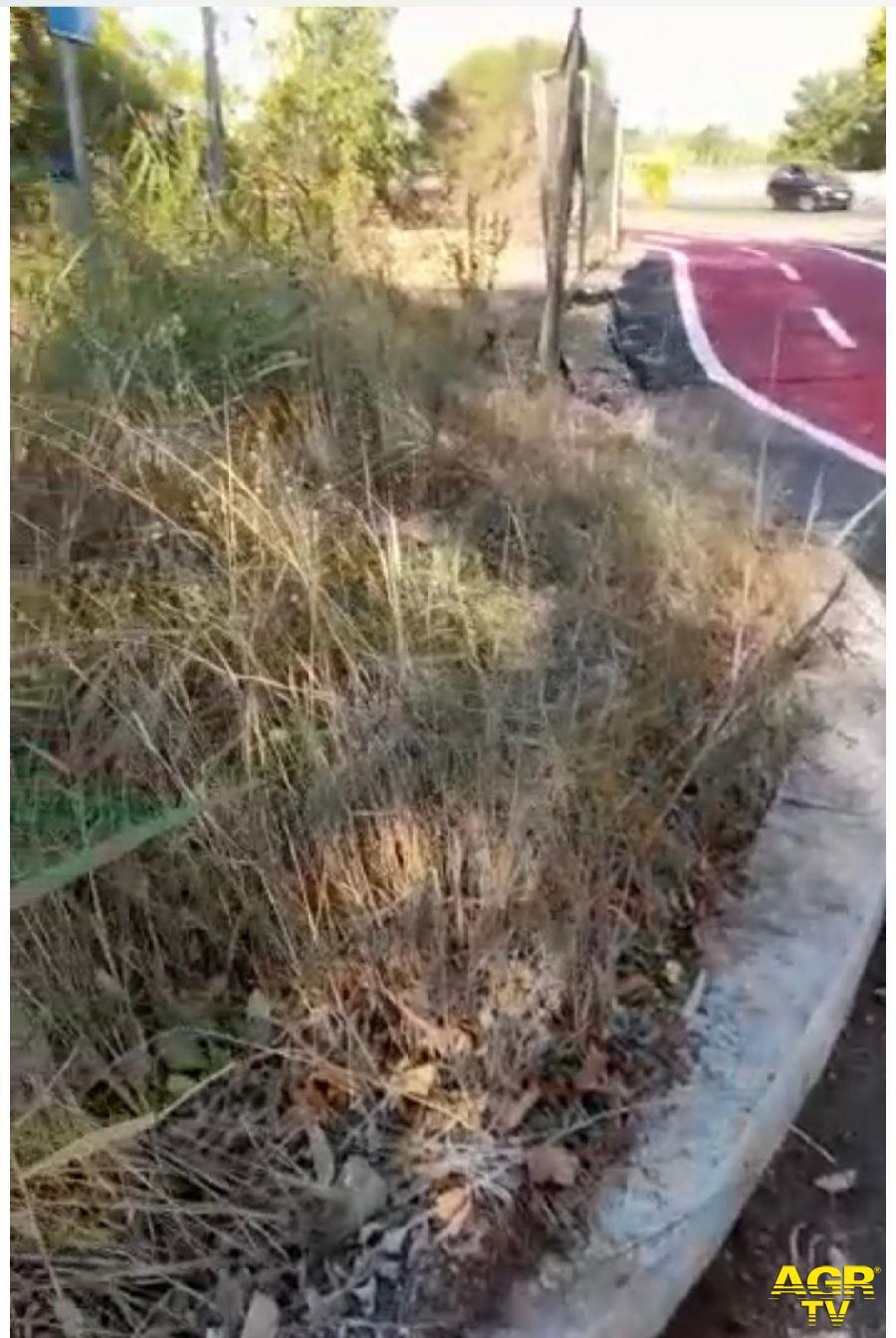 ciclabile parco Leonardo con erbacce sul percorso