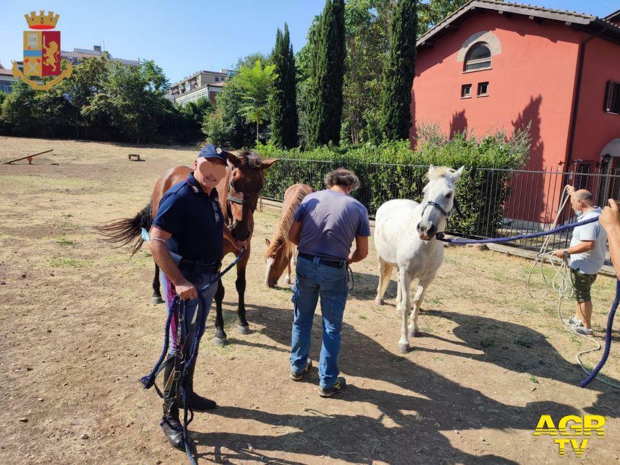 cavalli fuggiti da un maneggio in zona Marconi