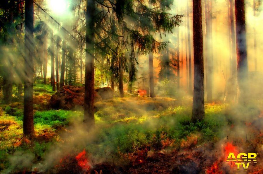 Lotta agli incendi, la Confeuro: rafforzare la prevenzione con gli agricoltori
