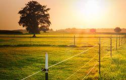 Fregene, ordinanza del comune: recinzioni per i terreni agricoli su strada
