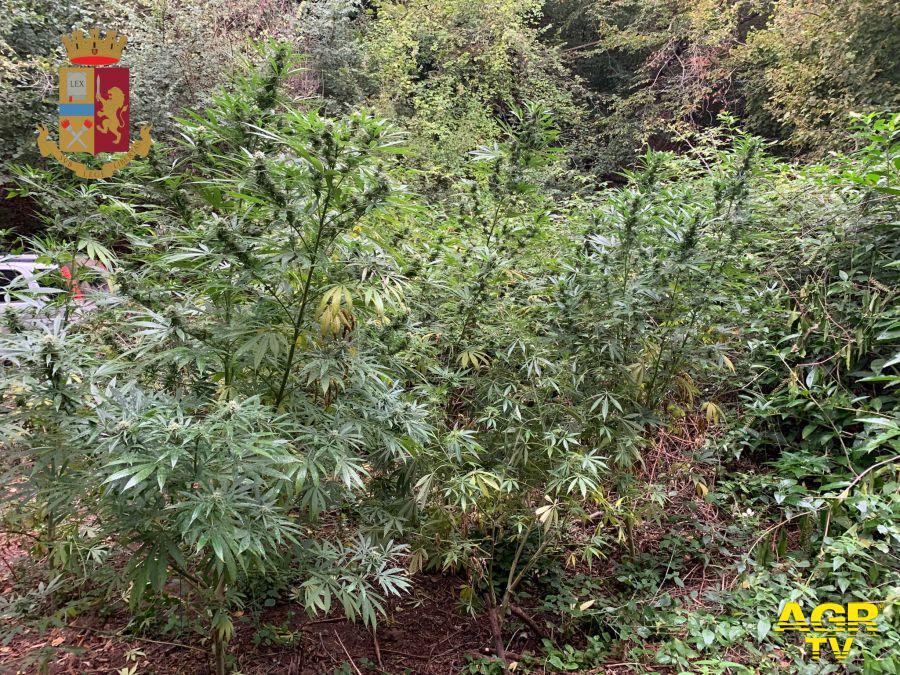 polizia spinaceto piante marjuana