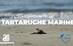 Terracina. Nati nuovi tartarughini. La scorsa notte è iniziata la schiusa dell'ultimo dei 10 nidi rinvenuti nel Lazio