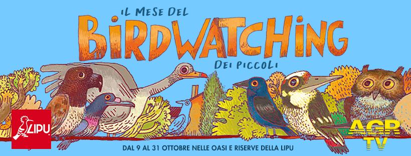 mese birdwatching locandina