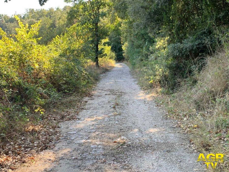 pulizia percorso della salute a Torrimpietra