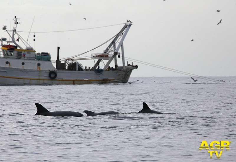 X Municipio, nuove regole per l'avvistamento in mare di specie marine protette