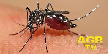 Chikungunya nel Lazio, impariamo a conoscerla