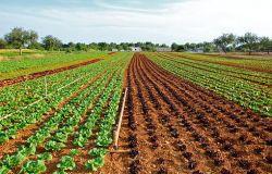 Green Economy,ecco il decalogo verde  per la sostenibilità