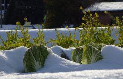 Emergenza ghiaccio, creata task force per aziende agricole