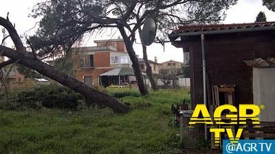 X Municipio: programmati 500 abbattimenti su alberature pericolose