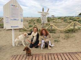 Maccarese, alla Bau Bau beach Cani senza frontiere, una sfida-gioco con gli amici a quattro zampe