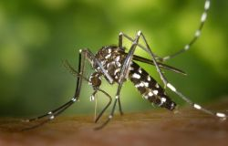 Campidoglio, emessa ordinanza anti-zanzara tigre, tutte le norme per i privati ed i condomini